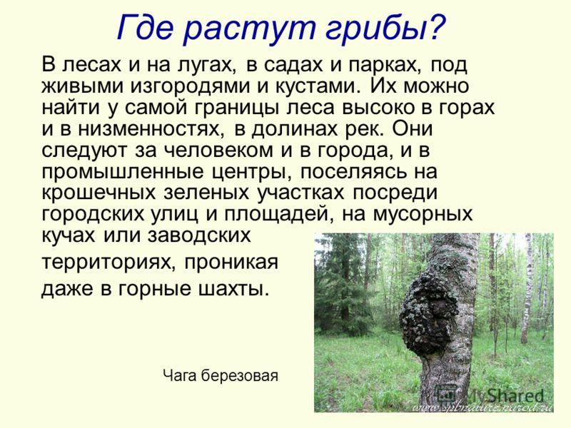 Где растут грибы? В лесах и на лугах, в садах и парках, под живыми изгородями и кустами. Их можно найти у самой границы леса высоко в горах и в низменностях, в долинах рек. Они следуют за человеком и в города, и в промышленные центры, поселяясь на кр