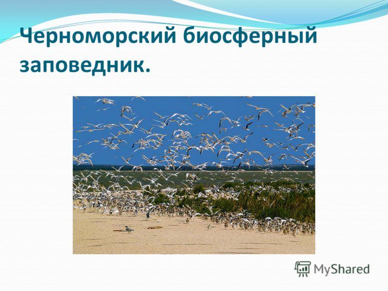 Черноморский биосферный заповедник.