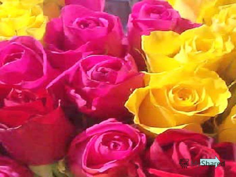 Хороша я в свадебном букете, И в саду, где свищут соловьи. Круглый год во многих странах мира Я служу признанием в любви.