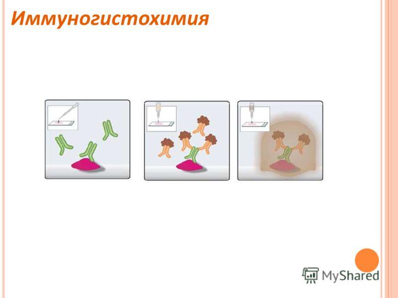 Иммуногистохимия