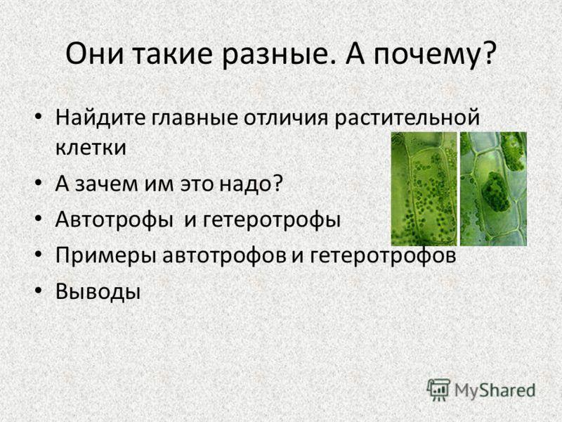 Они такие разные. А почему? Найдите главные отличия растительной клетки А зачем им это надо? Автотрофы и гетеротрофы Примеры автотрофов и гетеротрофов Выводы