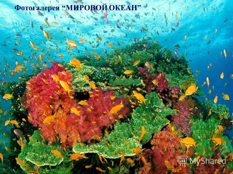 Фотогалерея МИРОВОЙ ОКЕАН Фотогалерея «Мировой океан»