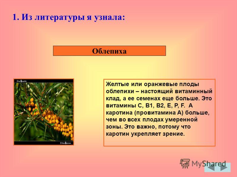 Облепиха Желтые или оранжевые плоды облепихи – настоящий витаминный клад, а ее семенах еще больше. Это витамины С, В1, В2, Е, Р, F. А каротина (провитамина А) больше, чем во всех плодах умеренной зоны. Это важно, потому что каротин укрепляет зрение.