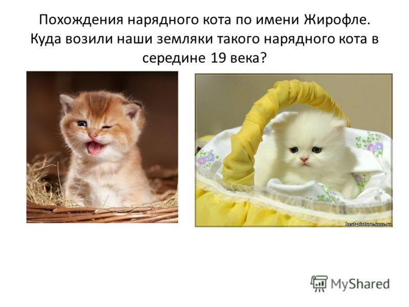 Похождения нарядного кота по имени Жирофле. Куда возили наши земляки такого нарядного кота в середине 19 века?