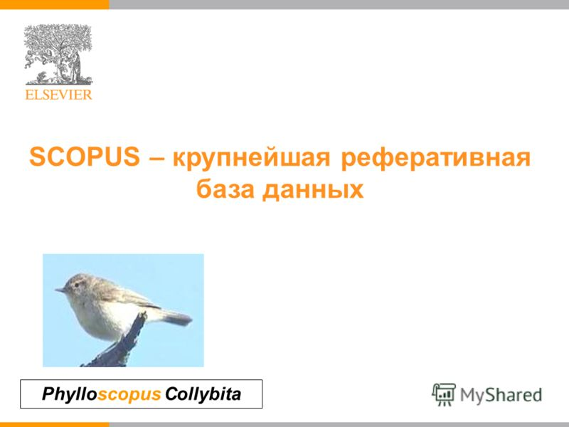 Phylloscopus Collybita SCOPUS – крупнейшая реферативная база данных