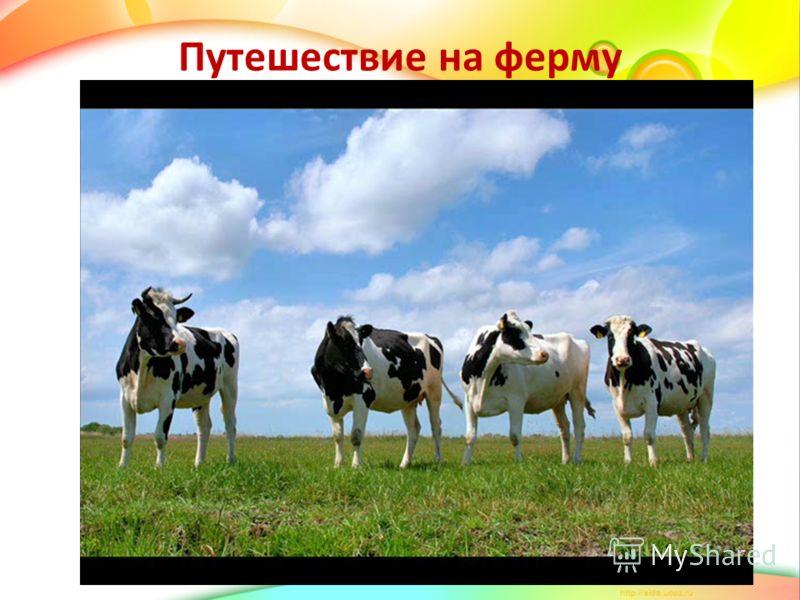 Путешествие на ферму