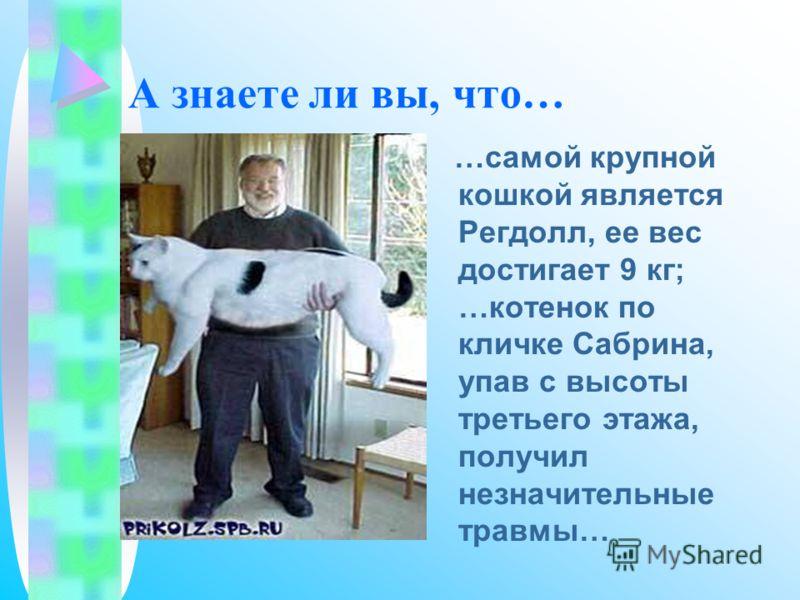 А знаете ли вы, что… …самой крупной кошкой является Регдолл, ее вес достигает 9 кг; …котенок по кличке Сабрина, упав с высоты третьего этажа, получил незначительные травмы…