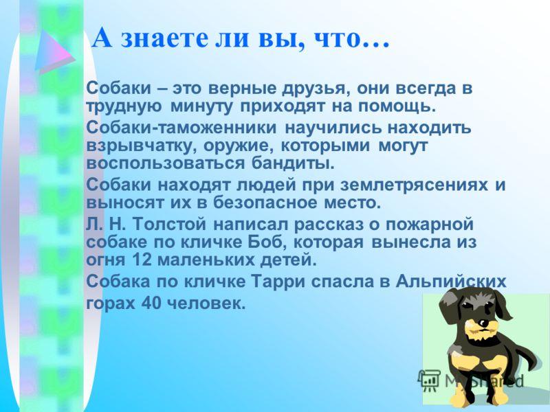 А знаете ли вы, что… Собаки – это верные друзья, они всегда в трудную минуту приходят на помощь. Собаки-таможенники научились находить взрывчатку, оружие, которыми могут воспользоваться бандиты. Собаки находят людей при землетрясениях и выносят их в