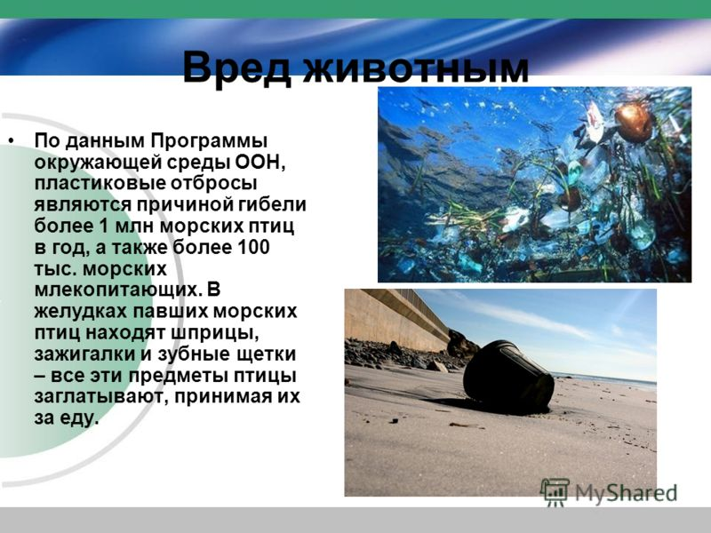 Вред животным По данным Программы окружающей среды ООН, пластиковые отбросы являются причиной гибели более 1 млн морских птиц в год, а также более 100 тыс. морских млекопитающих. В желудках павших морских птиц находят шприцы, зажигалки и зубные щетки