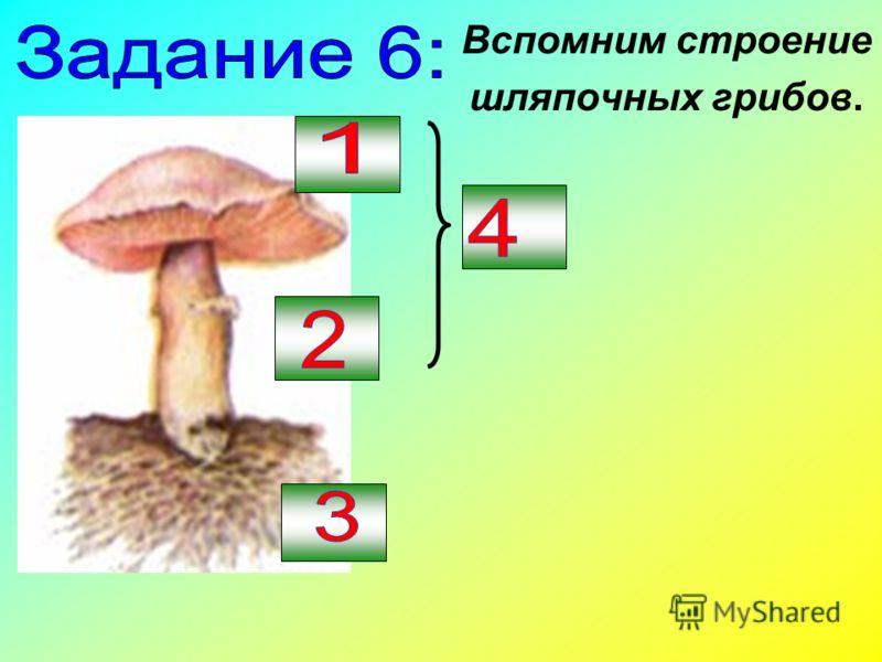 Вспомним строение шляпочных грибов.