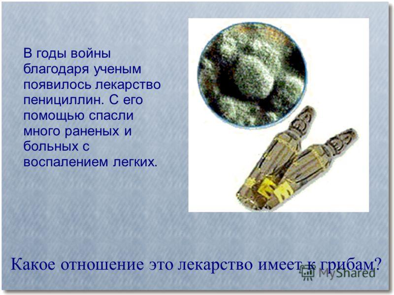 Какое отношение это лекарство имеет к грибам? В годы войны благодаря ученым появилось лекарство пенициллин. С его помощью спасли много раненых и больных с воспалением легких.