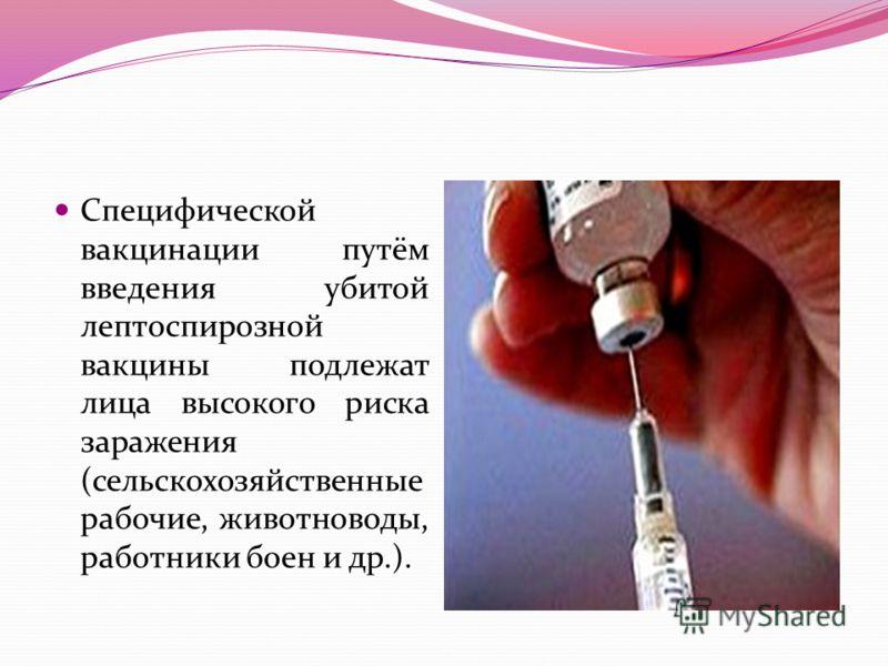 Специфической вакцинации путём введения убитой лептоспирозной вакцины подлежат лица высокого риска заражения (сельскохозяйственные рабочие, животноводы, работники боен и др.).