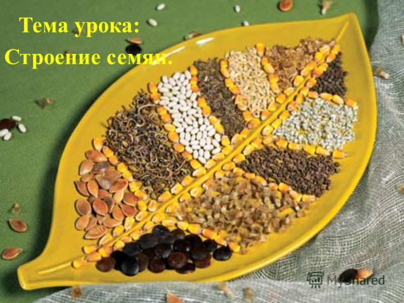 Тема урока: Строение семян.