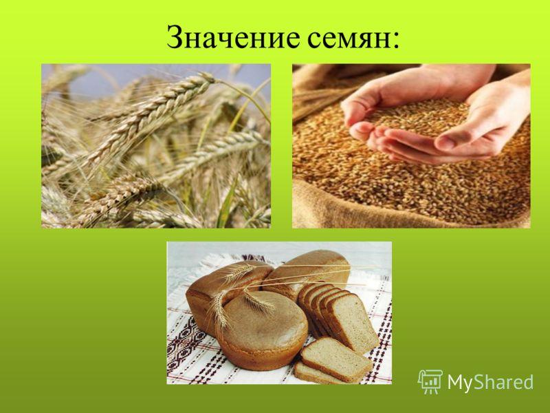 Значение семян: