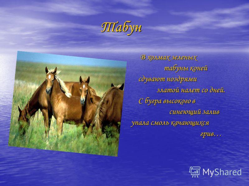 Табун Табун В холмах зеленых В холмах зеленых табуны коней табуны коней сдувают ноздрями сдувают ноздрями златой налет со дней. златой налет со дней. С бугра высокого в С бугра высокого в синеющий залив синеющий залив упала смоль качающихся упала смо