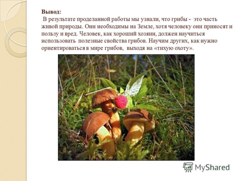 Вывод: В результате проделанной работы мы узнали, что грибы - это часть живой природы. Они необходимы на Земле, хотя человеку они приносят и пользу и вред. Человек, как хороший хозяин, должен научиться использовать полезные свойства грибов. Научим др