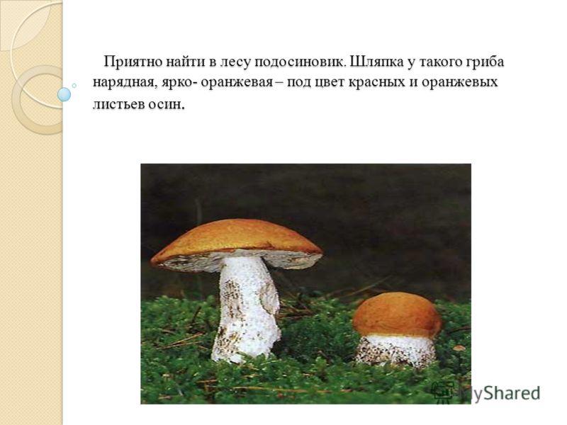 Приятно найти в лесу подосиновик. Шляпка у такого гриба нарядная, ярко- оранжевая – под цвет красных и оранжевых листьев осин. Приятно найти в лесу подосиновик. Шляпка у такого гриба нарядная, ярко- оранжевая – под цвет красных и оранжевых листьев ос