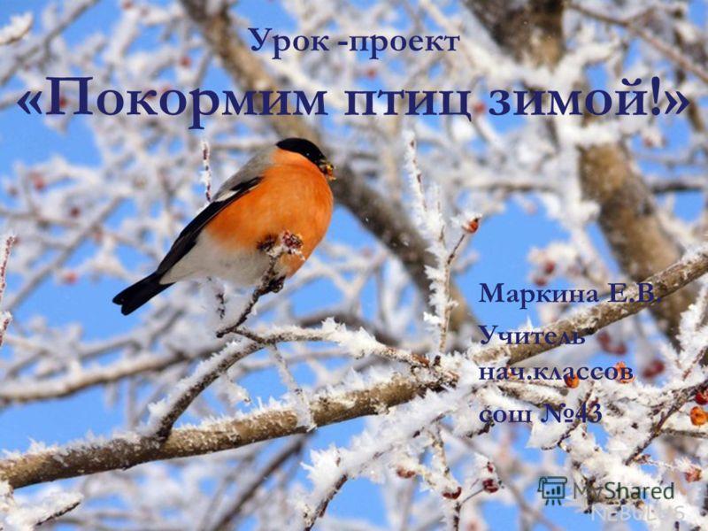 Урок -проект «Покормим птиц зимой!» Маркина Е.В. Учитель нач.классов сош 43