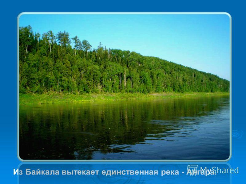 Из Байкала вытекает единственная река - Ангара.