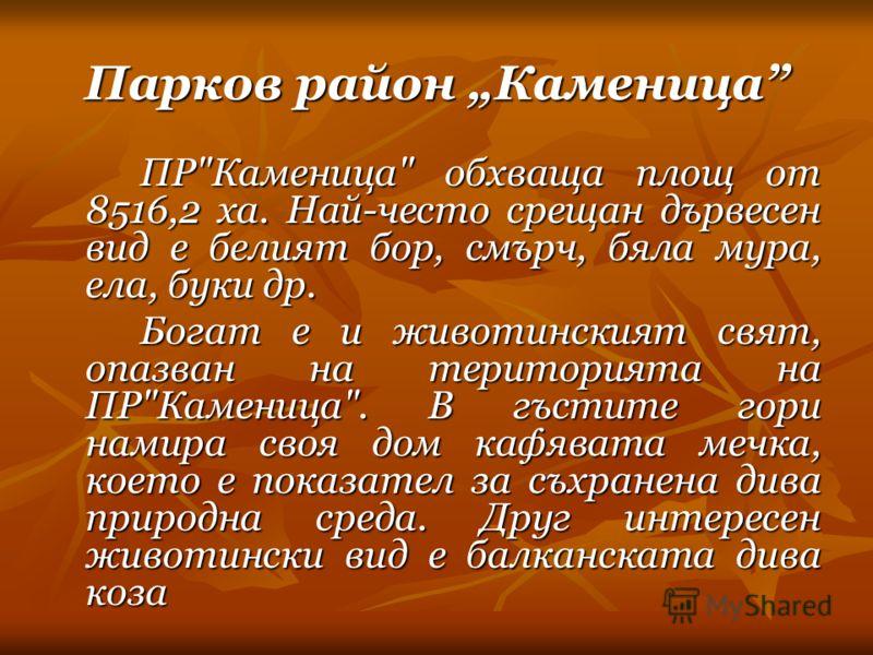 Парков район Каменица ПР