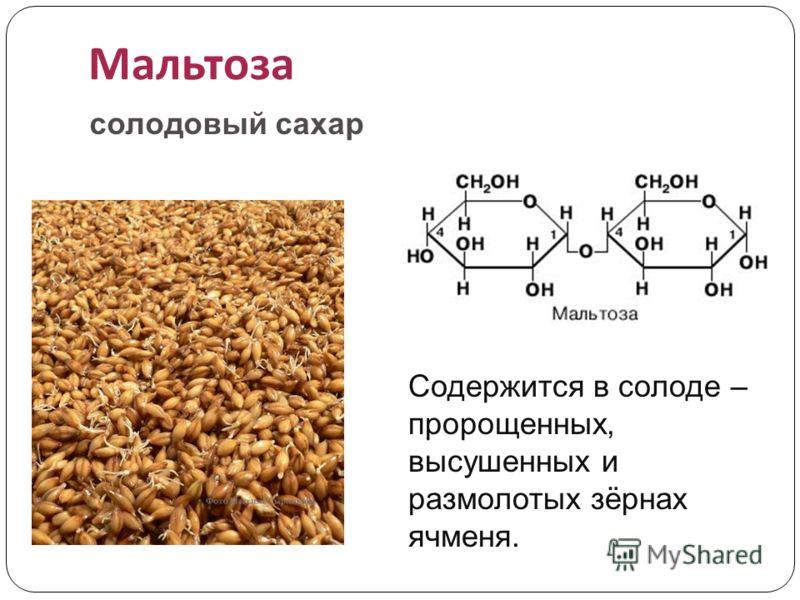 Мальтоза Содержится в солоде – пророщенных, высушенных и размолотых зёрнах ячменя. солодовый сахар