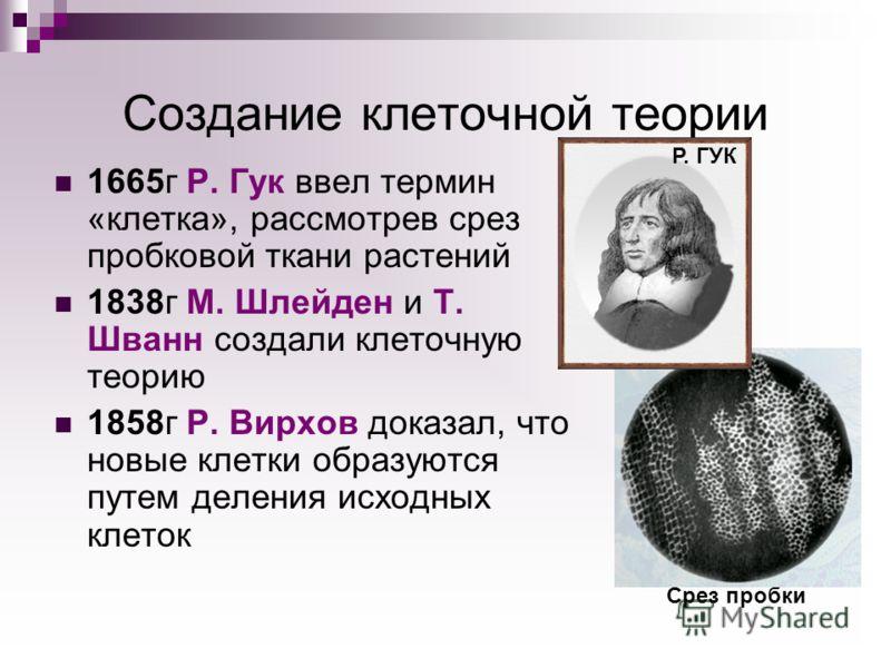 Создание клеточной теории 1665г Р. Гук ввел термин «клетка», рассмотрев срез пробковой ткани растений 1838г М. Шлейден и Т. Шванн создали клеточную теорию 1858г Р. Вирхов доказал, что новые клетки образуются путем деления исходных клеток Срез пробки