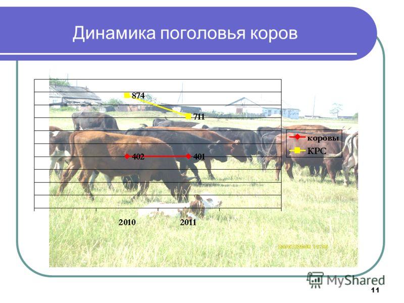 11 Динамика поголовья коров