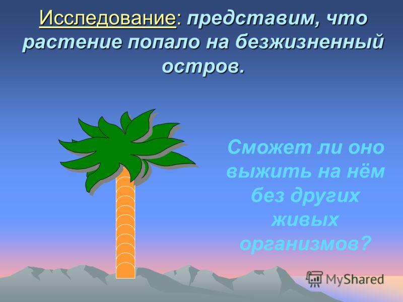 Исследование: представим, что растение попало на безжизненный остров. Сможет ли оно выжить на нём без других живых организмов?