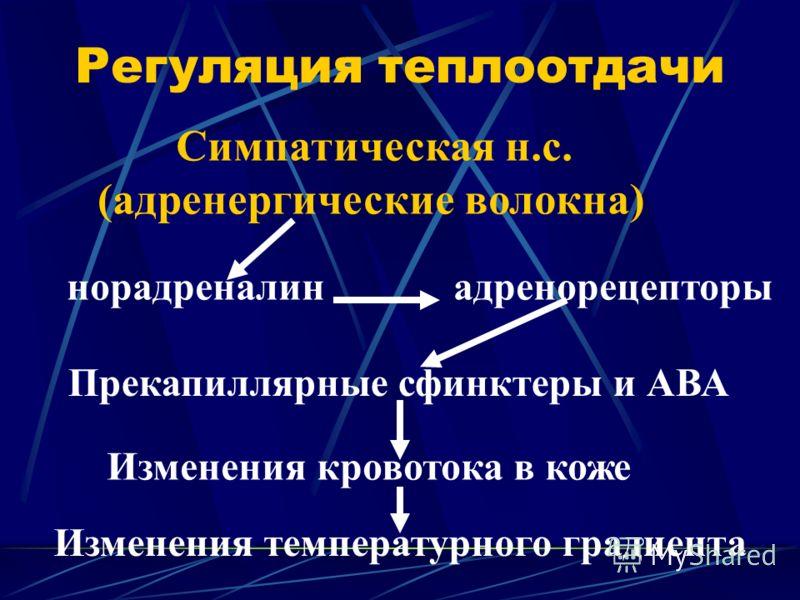 Регуляция теплоотдачи Симпатическая н.с. (адренергические волокна) норадреналинадренорецепторы Прекапиллярные сфинктеры и АВА Изменения кровотока в коже Изменения температурного градиента