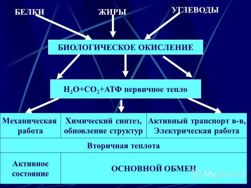БЕЛКИЖИРЫ УГЛЕВОДЫ БИОЛОГИЧЕСКОЕ ОКИСЛЕНИЕ Н 2 О+СО 2 +АТФ первичное тепло Механическая работа Химический синтез, обновление структур Активный транспорт в-в, Электрическая работа Вторичная теплота Активное состояние ОСНОВНОЙ ОБМЕН