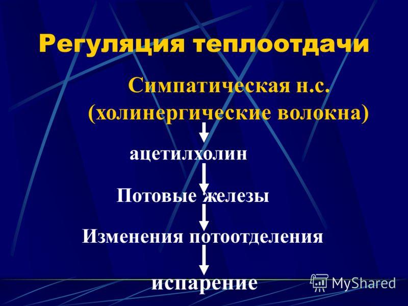 Регуляция теплоотдачи Симпатическая н.с. (холинергические волокна) ацетилхолин Потовые железы Изменения потоотделения испарение