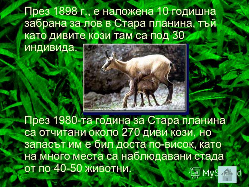 Балканска дива коза В България дивата коза се среща по стръмни склонове със скални комплекси в Рила, Пирин, Стара планина и Родопите от около 600 до 2 900 м н.в. Сведения за дивата коза в Родопите ни дава още Ксенофон, който пише, че траките са ловув