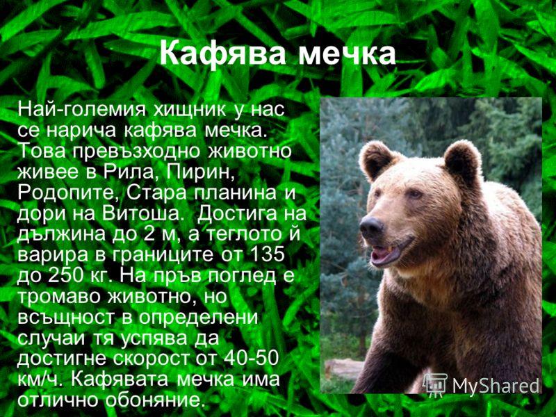 Защитени бозайници в България