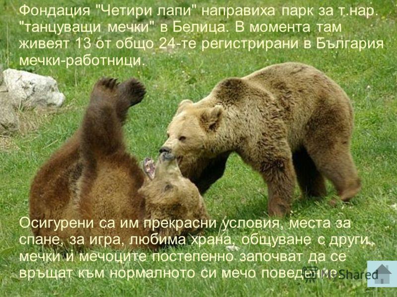 Счита се, че мечките са едни от най- интелигентните бозайници. В България тя е защитен от закона вид. За съжаление хората им нанасят непоправими щети, като разкъсват с пътища и огради ареала им, унищожават горите и ги избиват. Отстрелването на мечка