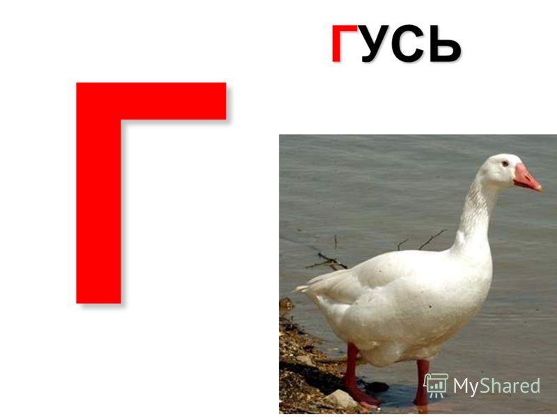 В ВИНОГРАД