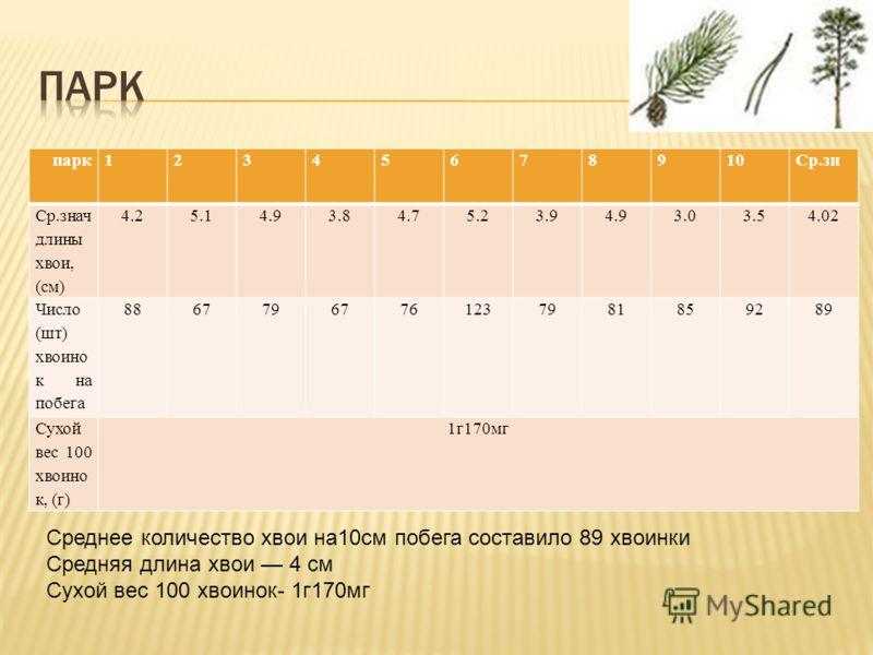 парк12345678910Ср.зн Ср.знач длины хвои, (см) 4.25.14.93.84.75.23.94.93.03.54.02 Число (шт) хвоино к на побега 8867796776123798185928989 Сухой вес 100 хвоино к, (г) 1г170мг Среднее количество хвои на10cм побега составило 89 хвоинки Средняя длина хвои