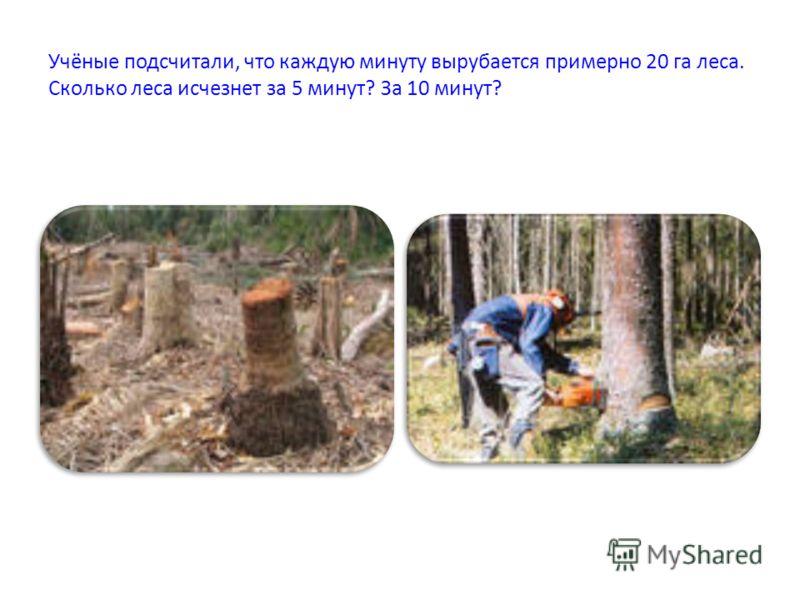 Учёные подсчитали, что каждую минуту вырубается примерно 20 га леса. Сколько леса исчезнет за 5 минут? За 10 минут?