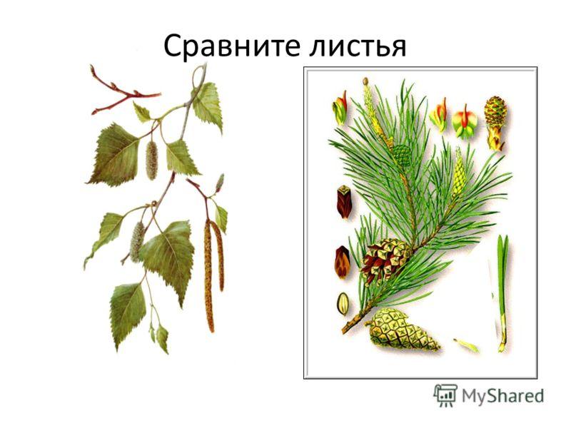 Сравните листья