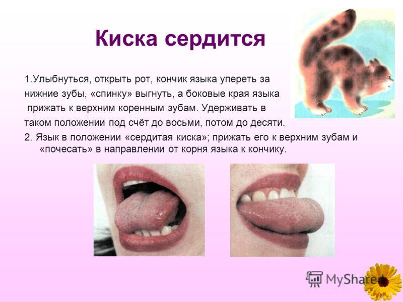 Киска сердится 1.Улыбнуться, открыть рот, кончик языка упереть за нижние зубы, «спинку» выгнуть, а боковые края языка прижать к верхним коренным зубам. Удерживать в таком положении под счёт до восьми, потом до десяти. 2. Язык в положении «сердитая ки