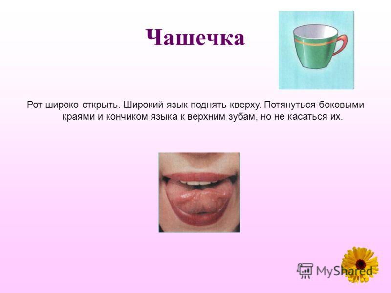 Чашечка Рот широко открыть. Широкий язык поднять кверху. Потянуться боковыми краями и кончиком языка к верхним зубам, но не касаться их.