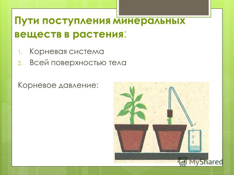 Пути поступления минеральных веществ в растения : 1. Корневая система 2. Всей поверхностью тела Корневое давление: