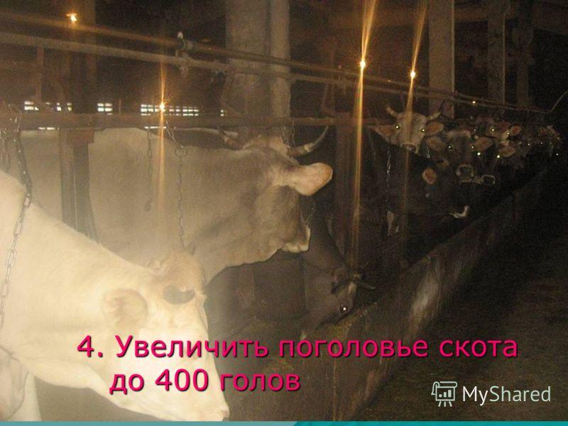 4. Увеличить поголовье скота до 400 голов