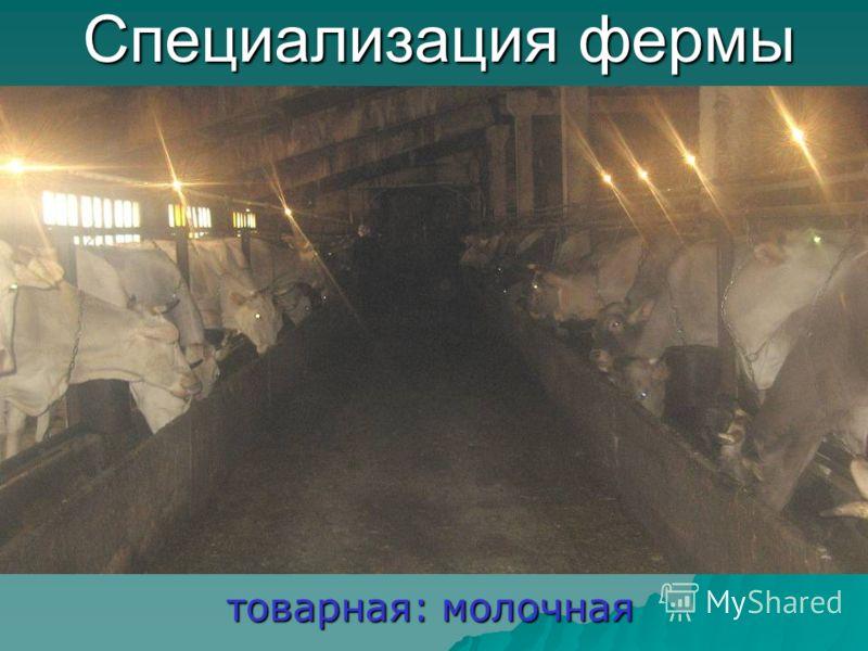 Специализация фермы товарная: молочная