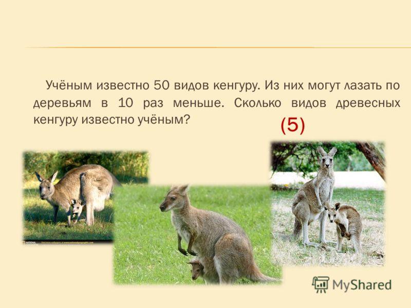 Учёным известно 50 видов кенгуру. Из них могут лазать по деревьям в 10 раз меньше. Сколько видов древесных кенгуру известно учёным? (5)