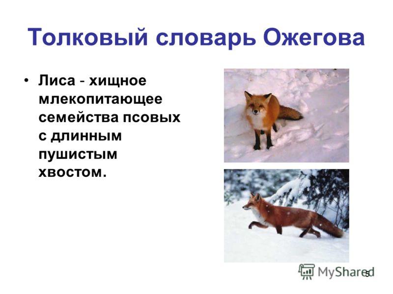 5 Толковый словарь Ожегова Лиса - хищное млекопитающее семейства псовых с длинным пушистым хвостом.