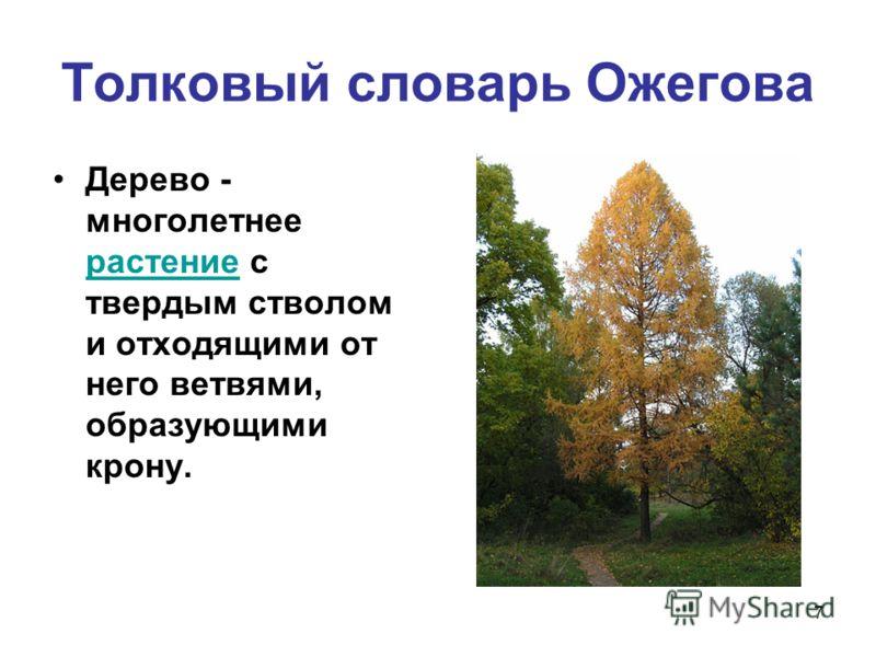 7 Толковый словарь Ожегова Дерево - многолетнее растение с твердым стволом и отходящими от него ветвями, образующими крону. растение