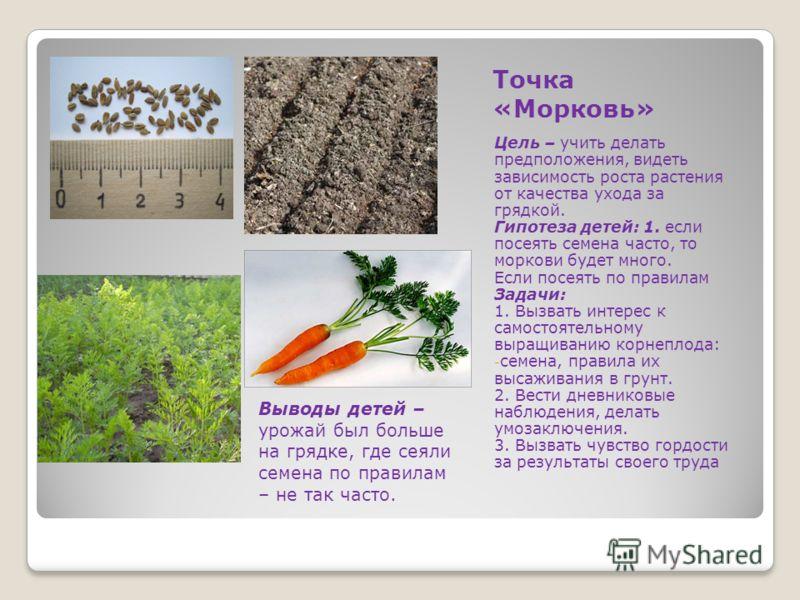 Точка «Морковь» Цель – учить делать предположения, видеть зависимость роста растения от качества ухода за грядкой. Гипотеза детей: 1. если посеять семена часто, то моркови будет много. Если посеять по правилам Задачи: 1. Вызвать интерес к самостоятел