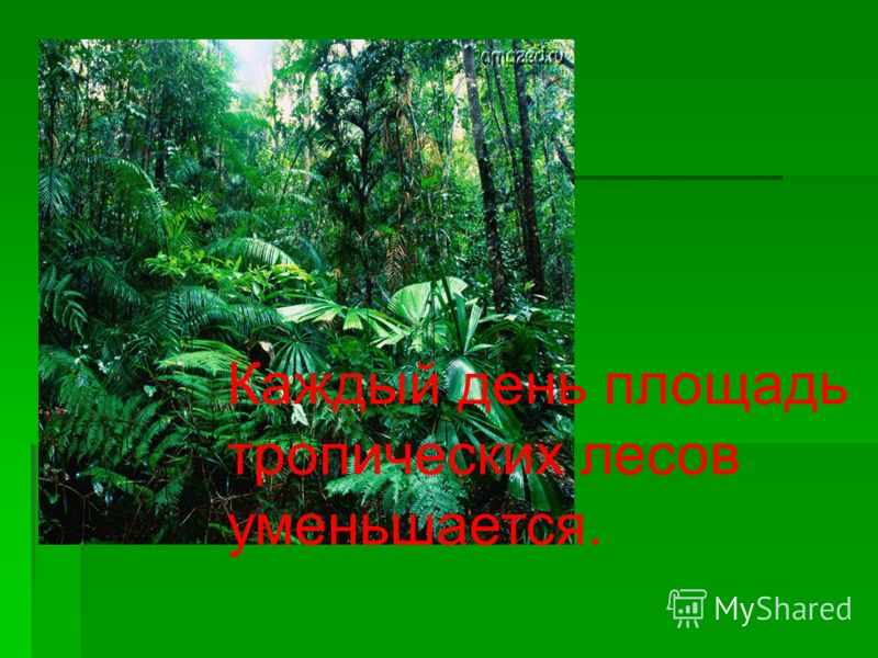 Каждый день площадь тропических лесов уменьшается.