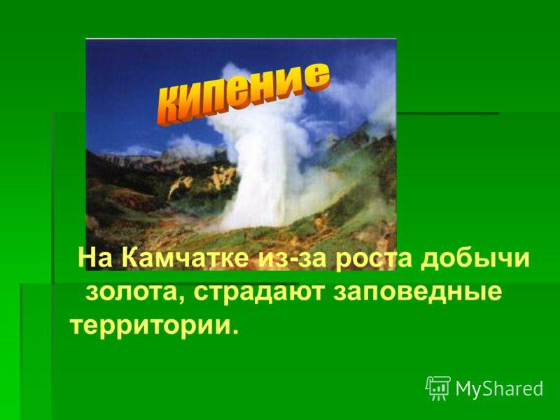 На Камчатке из-за роста добычи золота, страдают заповедные территории.