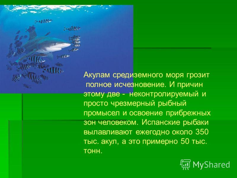 Акулам средиземного моря грозит полное исчезновение. И причин этому две - неконтролируемый и просто чрезмерный рыбный промысел и освоение прибрежных зон человеком. Испанские рыбаки вылавливают ежегодно около 350 тыс. акул, а это примерно 50 тыс. тонн